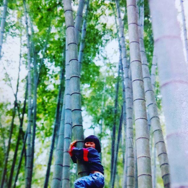 たけのこ娘の竹のぼり