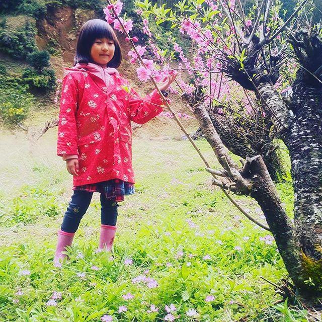 春#筍姫の里 #筍姫 #阿波たけのこ農園