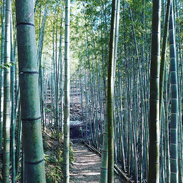 阿波たけのこ農園 竹林からの景色