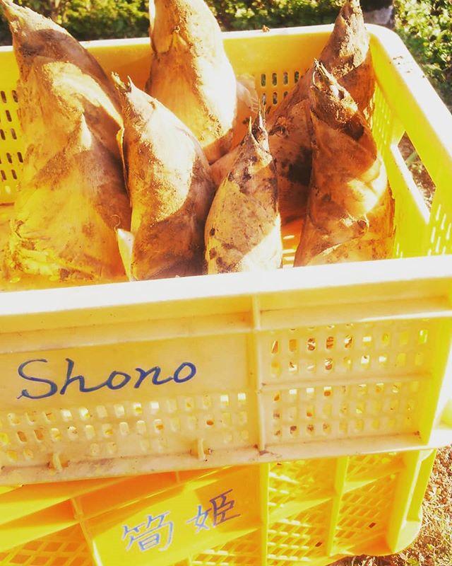#たけのこ #筍姫 #タケノコ #阿波たけのこ農園 #筍姫の里 #美しい里 #shono