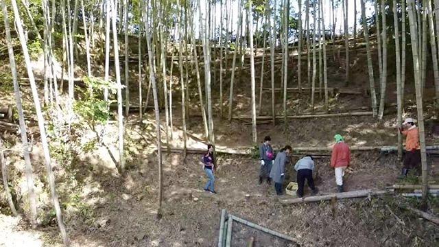 はじめてのたけのこ掘りなかなか見つけるのが難しいのです#たけのこ #筍 #筍姫 #阿波たけのこ農園 #dji #ドローン #徳島 #とくしま