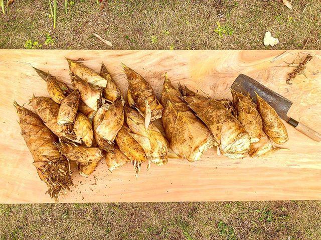 たけのこ^ - ^#たけのこ #筍姫 #阿波たけのこ農園 #とくしま #徳島 #たけのこ料理