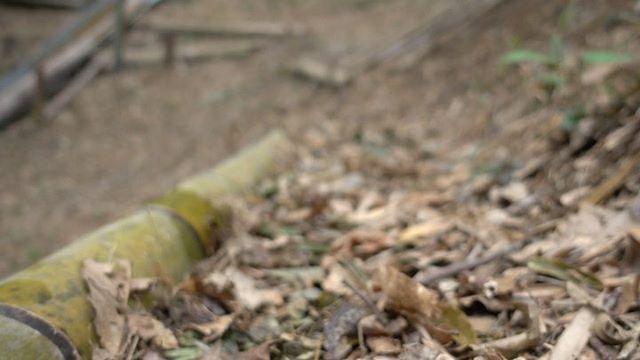 筍姫 vlogmavic miniたのしーー️ http://takenokohime.jp/#とくしま #たけのこ #筍姫 #阿波たけのこ農園 #vlog #mavicmini #dji