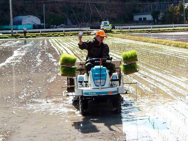 田植えおいしいお米を作ってます#田植え #ごはん #田んぼ #とくしま #農業 #地産地消