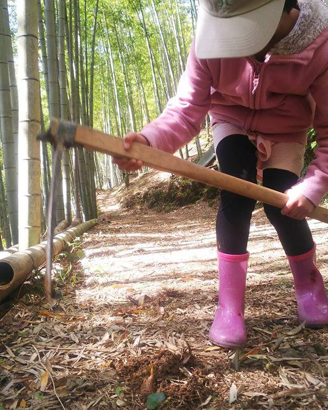 旬たけのこ#たけのこ #筍姫 #たけのこ掘り #徳島#阿波たけのこ農園