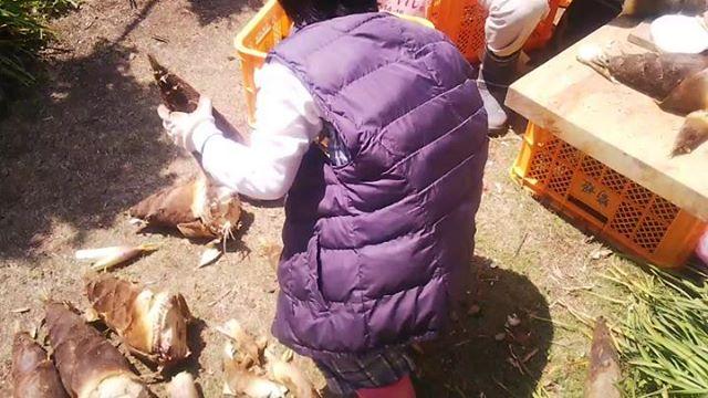 たけのこ姫のお手伝い①たくさん掘れたタケノコお姉ちゃんが率先してお手伝いしてくれました#筍姫 #タケノコ #たけのこ掘り #国産 #徳島 #tokushima #お手伝い #農業 #体験 #農業体験 #農園 #姫 #阿波たけのこ農園