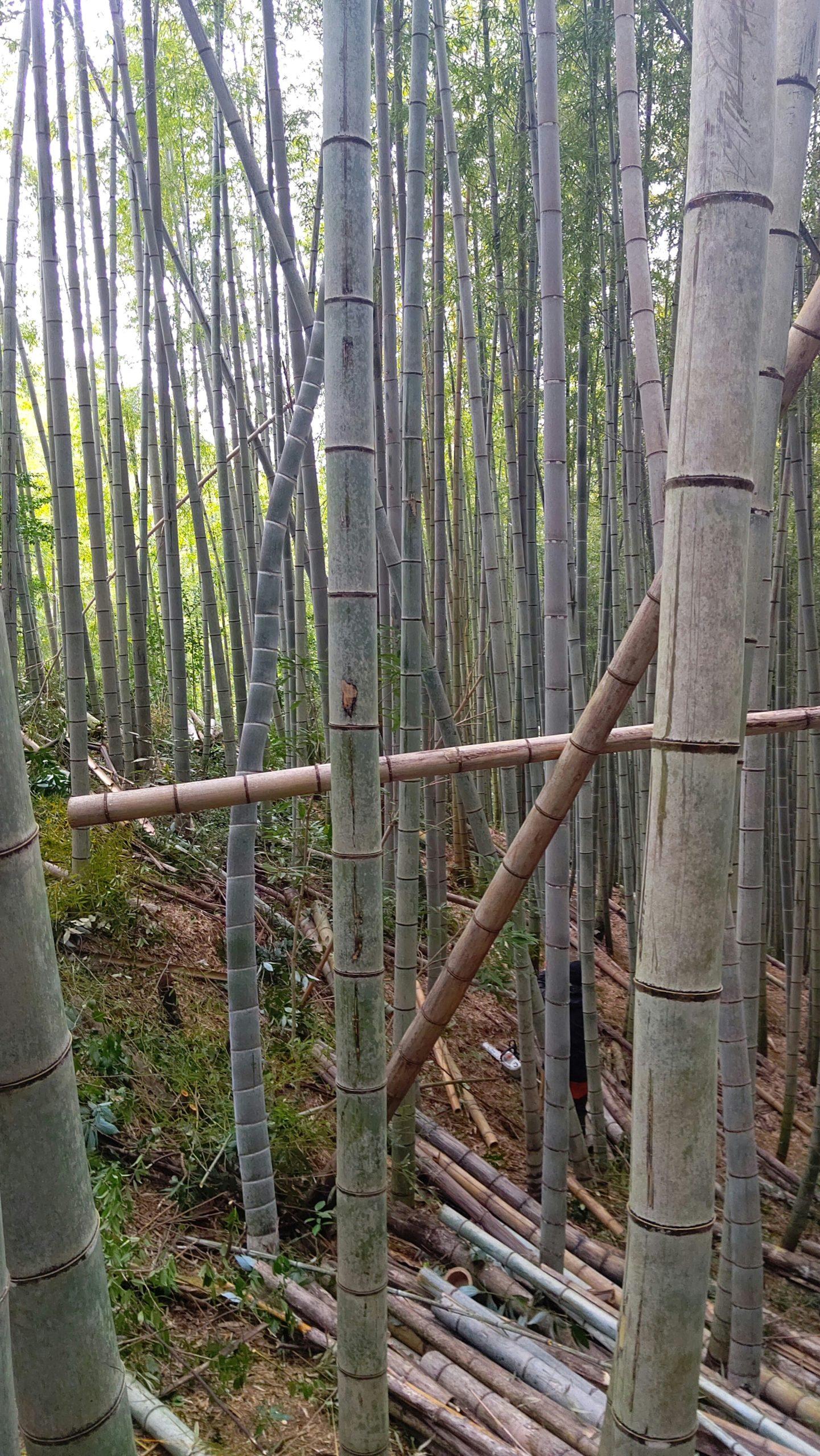 2020春シーズンの竹林整備の振り返り