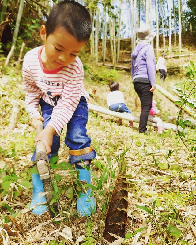 竹やぶ散策遊山びより️たけのこ掘りのお手伝い#筍姫 #阿波たけのこ農園 #遊山 #体験 #環境教育 #自然体験 #たけのこほり