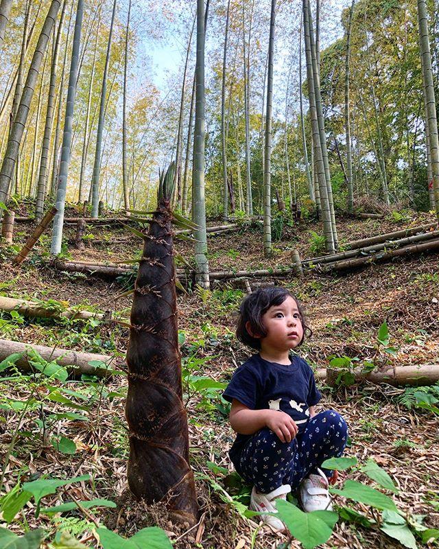 親竹と姫🥰 #たけのこ #竹 #筍姫 #農業 #阿波たけのこ農園