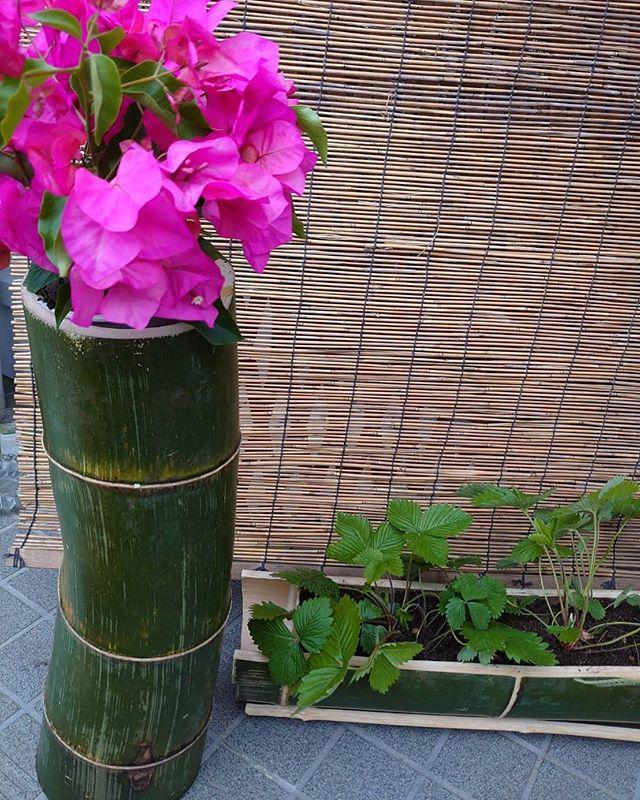 母の日の竹プランター