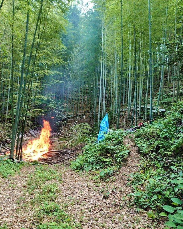 古竹を焼き払い