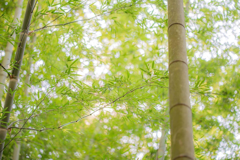台風が九州、四国地方に近づいてきてます折れませんように#竹#筍#竹林#筍姫