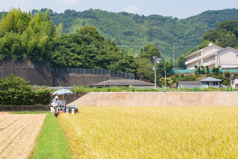 2020/08稲刈り#稲刈り#新米#里山#田んぼ#筍姫#阿波たけのこ農園