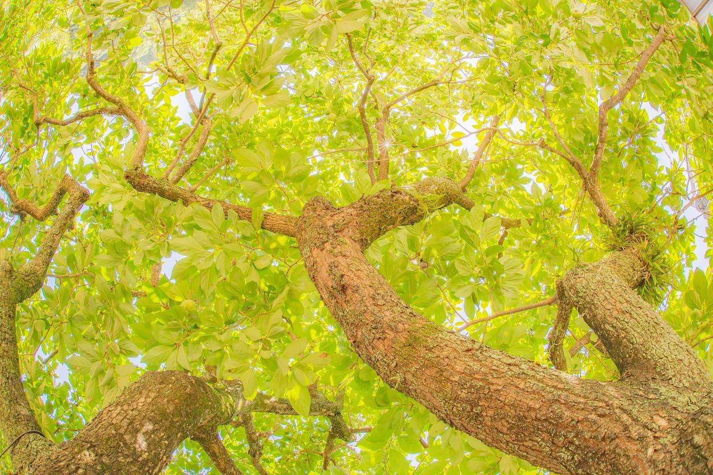 柿の木今年はどうでしょう#柿#食欲の秋ですね#今年はさんまが高騰しててまだ#食べてない#旬#筍姫#おいしいたけのこを育ててます
