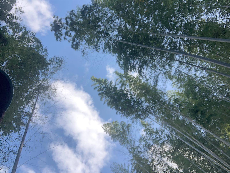 タケノコ収穫にむけて竹の間伐