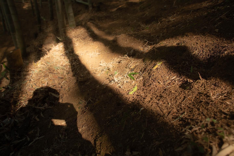 ええ竹やぶ#筍姫#阿波たけのこ農園#土づくり#徳島県