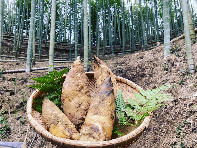 #bambooshoots #bamboo #japan #anan #takenokohime #awatakenokonouen #takenoko