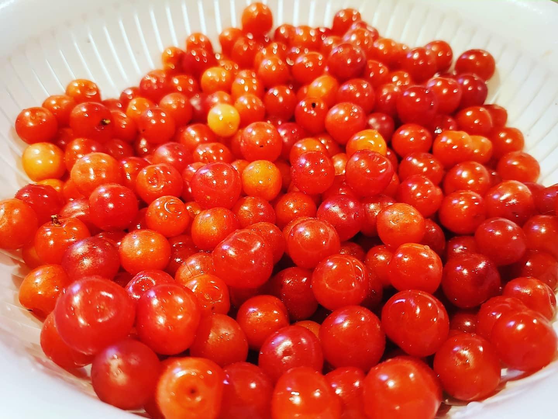 ゆすらうめすっぱあまい雨の合間に収穫できました#ゆすらうめ #赤い実 #果樹 #収穫 #ユスラウメ #fruit #阿波たけのこ農園