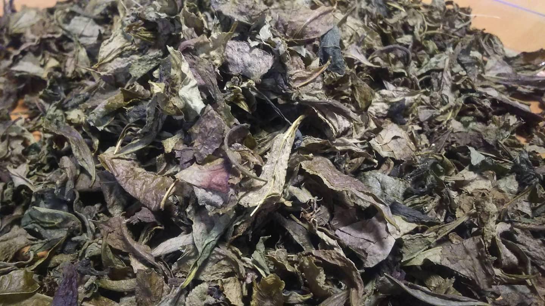 竹やぶのお茶づくり