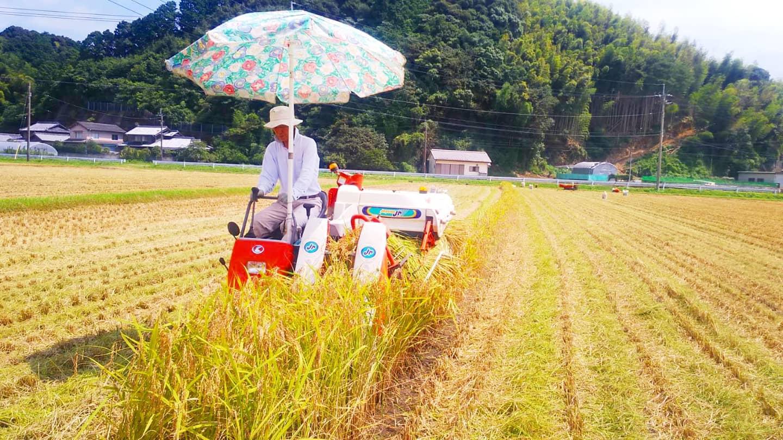 2021年は少し遅れましたが8月には稲刈り完了!